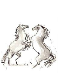 Het paardenboek - 2 koniks
