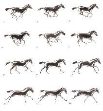 Het paardenboek - Muybridge 2